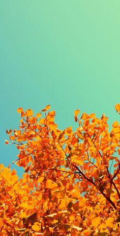 Autumn Leaves Themed Light Weight (1x4) Regulation Size Custom Cornhole Board Game Set - Corn Hole - Bag Toss