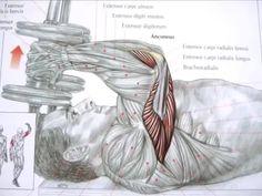 #Building #Triceps Bodybuilding Training, Bodybuilding Workouts, Powerlifting Training, Gym Boy, Body Building Tips, Training Tips, Exercises