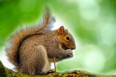 "squirrels gather nuts they scamper up and down trees I try to focus   Carol Campbell (Does anyone know where all the options went for Wordpress? Like symbols and such?) ""Experiencing the Deep ..."