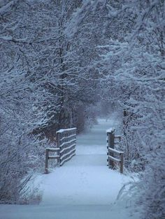 I love the stillness, the crisp air, the sound of snow crunching beneath my feet ...