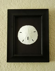 framed sand dollar-nice to take back. Also good for cake table or one of tables at entrance