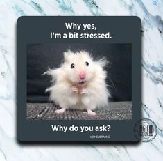Cute Animal Memes, Funny Animal Quotes, Animal Jokes, Funny Animal Pictures, Cute Funny Animals, Funny Cute, Funny Photos, Too Funny, Free Funny Pictures