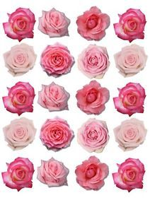 71 best wafer paper flower making images on pinterest how to make 20 smaller edible flower rose cakecupcake ricewafer paper toppers mightylinksfo