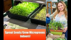 Shirley Bovshow teaches Cameron Mathison of the Home & Family Show how to sprout seeds and grow organic microgreens indoors. Learn how to sprout seeds in four days and grow organic microgreens … Growing Sprouts, Growing Microgreens, Hydroponic Growing, Growing Seeds, Hydroponics, All About Plants, Sprouting Seeds, Buy Seeds, Grow Organic