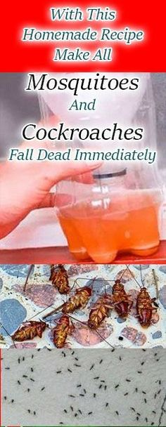 9.	A Powerful Homemade Recipe That Makes All The Mosquitoes and Cockroaches Fall Dead Immediately! !!!zz a