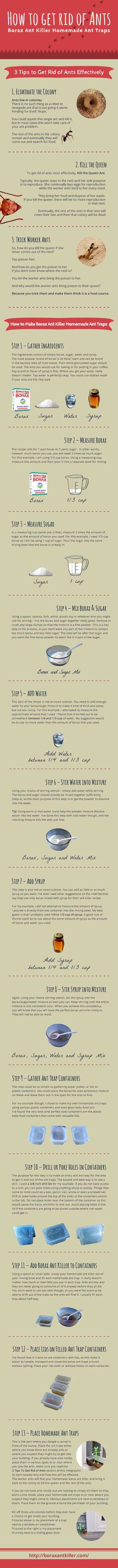 how-to-get-rid-of-ants-homemade-borax-sugar-mixture