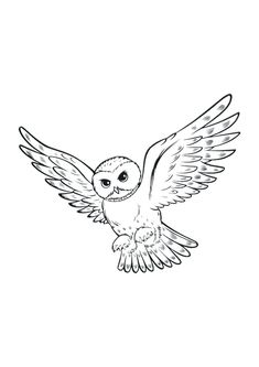 Drawings of Harry Potter. Pictures of Harry Potter and his friends Ron and Hermione and his owl Hedwig. Print theses coloring pictures for your children. Harry Potter Tattoos, Harry Potter Lines, Images Harry Potter, Harry Potter Drawings, Hedwig Tattoo, Buho Tattoo, Feather Template, Harry Potter Coloring Pages, Model Tattoo