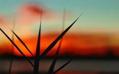 #3970 Wind Turbine, Flora, Sunrise, Coast, Sunrises, Sunrise Photography, Rising Sun, Seaside
