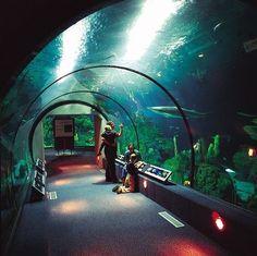 Aquarium tunnel... Moody Gardens... Galveston