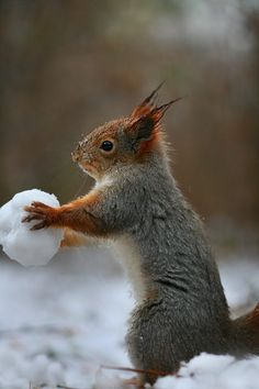 Cool! Snowball fight!