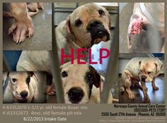 Featured Dogs - 8/22/2013 - -Status – RESCUED. -DESERT HEARTS Animal Compassion www.facebook.com/desertheartsphoenix