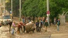 Enchente causa tragédia na Geórgia, e animais de zoo ficam à solta
