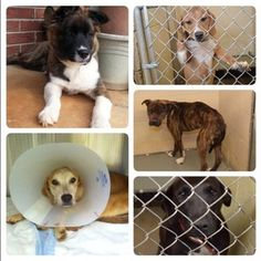Flash Fundrazr to help NEHS - New England Humane Society needs your help! We currently have vetting   and boarding bills that cannot be sustained on our current budget!   Please help us so we can continue to help dogs! Our current boarding   costs are over $17,000 per month!! That ...
