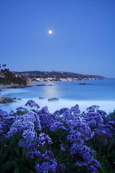 Laguna Moonrise – Laguna Beach, California- i can literally SMELL the flowers here eeeeeeeee
