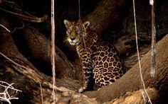 Amazônia: a maior floresta tropical do mundo | Curiosidade animal
