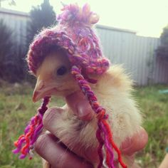 34 Cute Chicks In Nothing ButHats