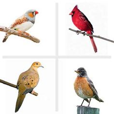 How to fill your bird feeder with yummy treats to attract all kinds of birds