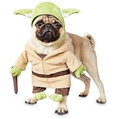 Give your canine a wise look well beyond his years with the Star Wars Yoda Illusion Dog Costume. Little green feet at the end of the front sleeves give your pup an adorable two-legged illusion. Yoda Dog Costume, Puppy Halloween Costumes, Pet Costumes For Dogs, Puppy Costume, Funny Costumes, Dog Halloween, Halloween Ideas, War Dogs, Star Wars Costumes