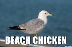 Beach chicken aka Seagull