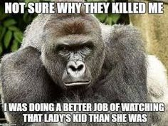 Image result for harambe memes