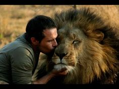 Some people might perceive Kevin Richardson as completely crazy and irrational, but the animal behaviorist has immense hopes of salvaging and restoring wildlife habitats and their animals, particularily lions. Kevin Richardson, Beautiful Cats, Animals Beautiful, Cute Animals, Wild Animals, Baby Animals, Man Hug, Vida Animal, Wild Lion