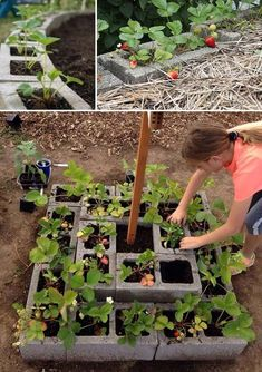 DIY Saving Space Ideas for Growing Strawberries Grow strawberry plants in cinder blocks to keep them off the ground , and the warmth of the blocks can help strawberries grow health. Strawberry Beds, Strawberry Tower, Strawberry Planters, Strawberry Garden, Strawberry Hanging Basket, Strawberry Patch, Container Gardening, Gardening Tips, Organic Gardening