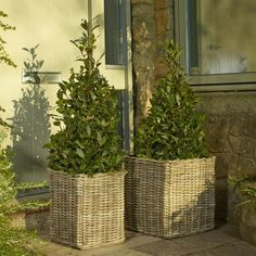 Set Of Two Kubu Willow Square Planters - gardening