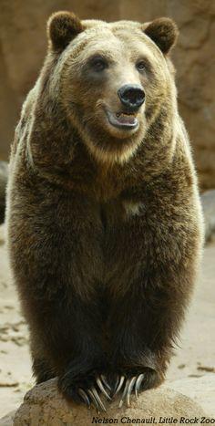 Aimee as a bear, Dark Hunters series by Sherrilyn Kenyon