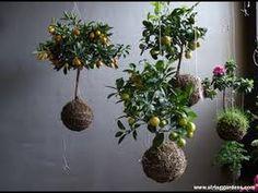 kokedama | Ideas para realizar Kokedama | Planteras Kokedama - YouTube