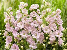chelsea flower show 2019 images - Google Search Chelsea Flower Show, Flower Images, Google Search, Flowers, Plants, Gardens, Florals, Plant, Flower