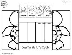 Kindergarten Themes, Kindergarten Lesson Plans, Preschool Worksheets, Preschool Crafts, Science For Kids, Science Activities, Craft Activities For Kids, Sea Turtle Life Cycle, Sunflower Life Cycle