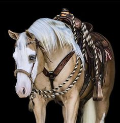 Cute Horses, Pretty Horses, Horse Photos, Horse Pictures, Palomino, Most Beautiful Horses, Animals Beautiful, Reining Horses, American Quarter Horse
