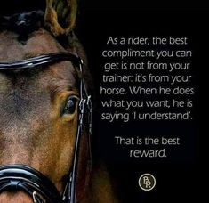 The most important role of equestrian clothing is for security Although horses can be trained they can be unforeseeable when provoked. Riders are susceptible while riding and handling horses, espec… Equine Quotes, Equestrian Quotes, Horse Quotes, Horse Sayings, Cowboy Quotes, Equestrian Problems, All The Pretty Horses, Beautiful Horses, Riding Quotes