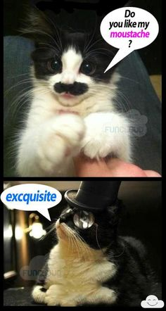 Nothing better then a cat with a mustache :-)