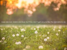 Roses are red, Violets are blue; But they don't get around Like the dandelions do. -Slim Acres