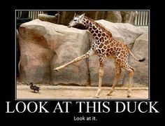 Funny Animal Demotivations   Wild Domestic Animals Look Stories and Photos