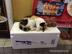 check this great photo from Katzenworld  http://katzenworld.co.uk/2015/07/03/cat-travel-cats-of-osaka-%e5%a4%a7%e9%98%aa/