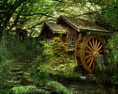 houses in forest - Google Search