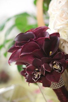 Burgundy Calla Lillies-The English Garden-949-494-4733
