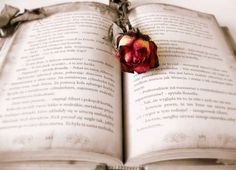 A list of 15 YA Fairy Tales that are sure to entice.