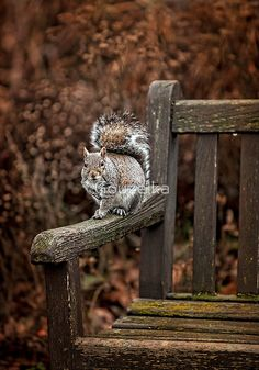 Country Living ~ Squirrel in Autumn Hamsters, Rodents, Beautiful Creatures, Animals Beautiful, Animals And Pets, Cute Animals, Little Critter, Chipmunks, Autumn Leaves
