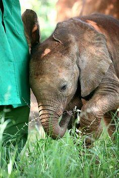 Sities (The David Sheldrick Wildlife Trust)