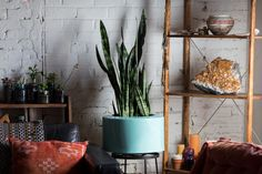 5 Houseplants You Couldn't Kill Even If You Tried - Snake Plant - from InStyle.com