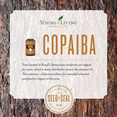 The centuries-old process for extracting Copaiba essential oil is so important to our SeedToSeal promise. Historical Data: Healers and curanderos in the Amazon use copaiba resin for all types of discomfort and inflammatory issues, both internal and external. In Peruvian traditional medicine, three or four drops of the resin are mixed with a spoonful of honey and taken as a natural sore throat reliever. It is also employed in Peruvian and Brazilian herbal medicine systems to help manage…