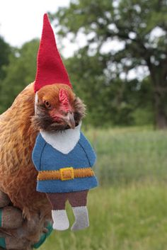 Chicken Gnome Costume- Way to combine my two favorite things! Chicken Gnome Costume- Way to combine my two favorite things! Chicken Gnome Costume- Way to combine my two favorite things! Chicken Gnome Costume- Way to combine my two favorite things! Chickens And Roosters, Pet Chickens, Raising Chickens, Chickens Backyard, Urban Chickens, Costumes Poulet, Chicken Costumes, Farm Animals, Funny Animals