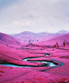 This is a prime example of Richard Mosse's use of old infra-red film to produce a pink effecton his images.