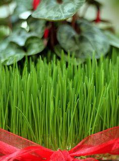 www.pysankastore.com Happy Nowruz! A Basic Guide to Celebrating Persian New Year!