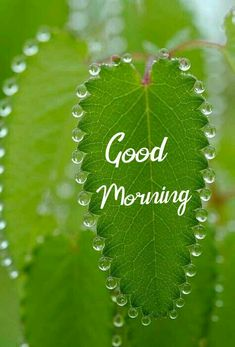 Good Morning Flowers Rose, Good Morning Flowers Pictures, Good Morning Beautiful Images, Good Morning Image Quotes, Good Morning Cards, Good Morning Images Download, Cute Good Morning, Happy Morning, Good Morning Picture