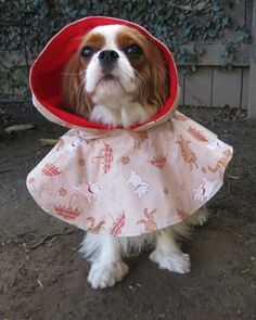 Dog Raincoat Jacket Hood. Spot the cavalier