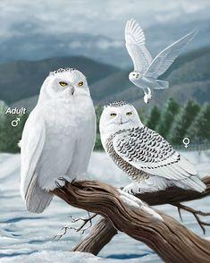 Family of owls. Owl Bird, Bird Art, Pet Birds, Beautiful Owl, Animals Beautiful, Cute Animals, Owl Photos, Owl Pictures, Owl Artwork